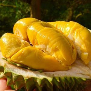 FROZEN DURIAN – NEW PRODUCT!!!